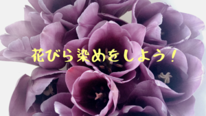 お家で簡単に花びら染めをしよう!